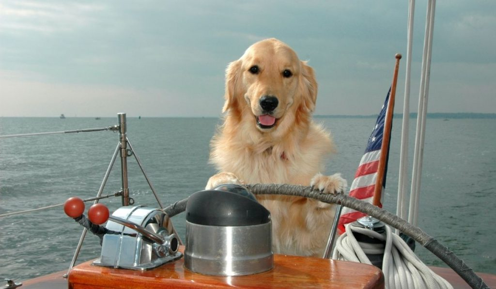 Dogs Yachting