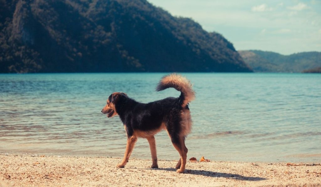 a dog walking by the sea shore