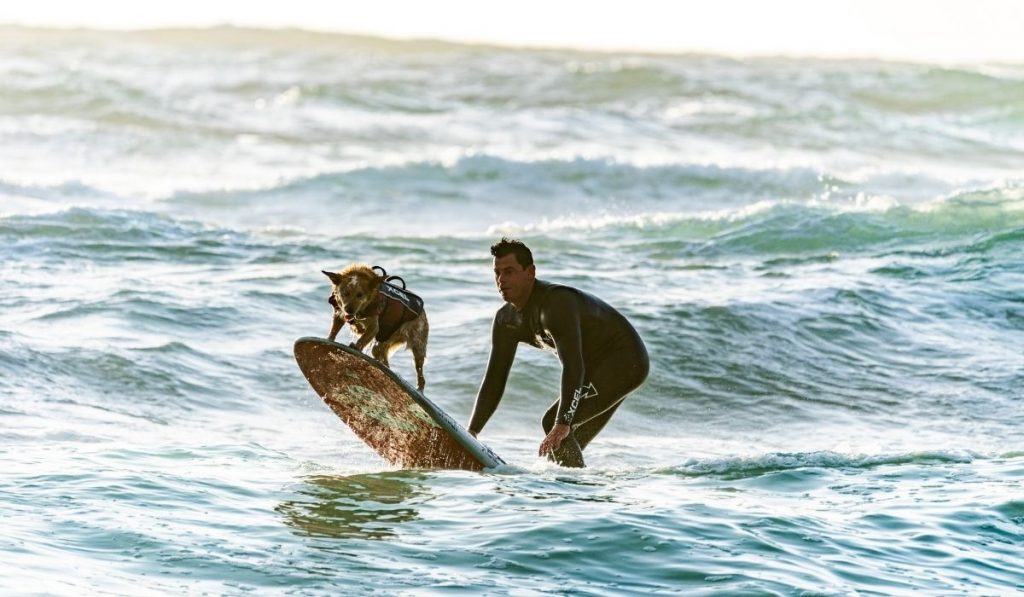 a surfer with his surfer dog surfing