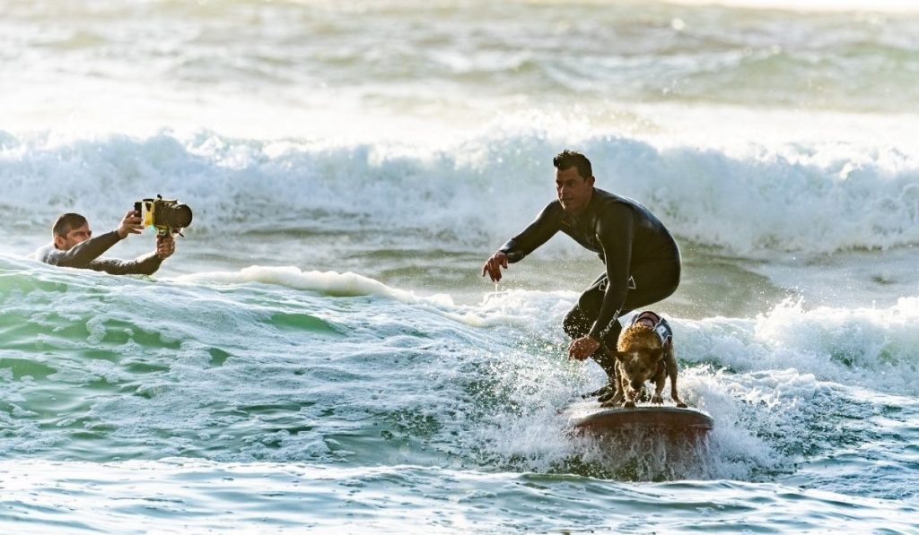 a videographer shooting a surfer who is surfing with his surfer dog